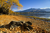 Autumn colors on lake Wanaka, south island, New Zealand