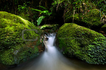 Small stream flowing through green moss covered rocks. New Zealand
