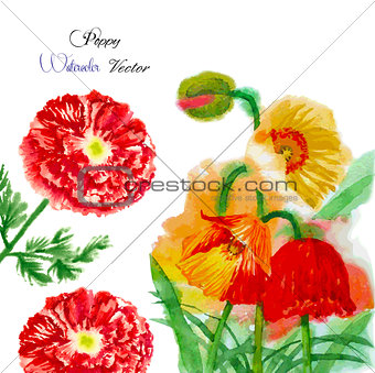 Watercolor background with red poppy-04