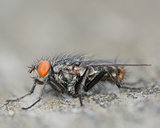 A Perched Fly