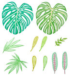 Watercolor tropical green leaves