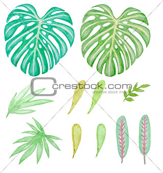 Watercolor tropical green leaves