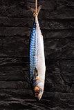 Mackerel hanging.