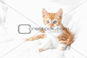 kitten abstract