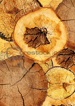 Background with texture cut of a log