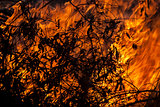 Burning leaves in wild fire