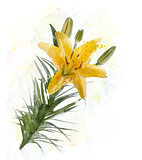 Yellow Lily Watercolor