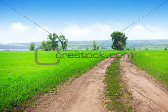 Countryside road through the green grass field