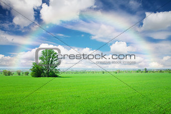 Green grass field, blue sky with clouds and rainbow