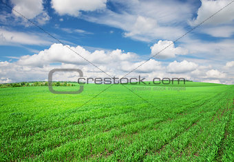 Green grass field and sky with clouds