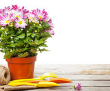 Potted flower and garden tools