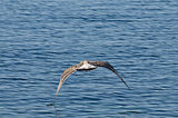 Birds over sea in Nesebar- Bulgaria