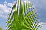 Palm leaves over blue sky with clouds on the shore