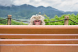 Monkey over bench