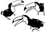 Toucan Set