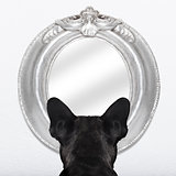 dog at the mirror