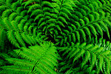 Center of fern tree in native bush, New Zealand