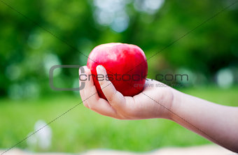 Apple in one hand