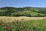 Spring landscape. Tuscany, Italy