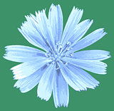 vector light blue flower