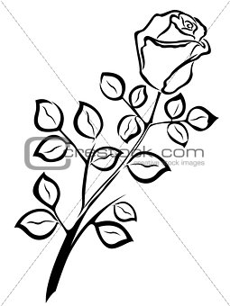 Black outline of single rose flower