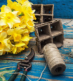 garden tools and cut daffodils