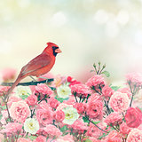 Red Cardinal In Rose Garden