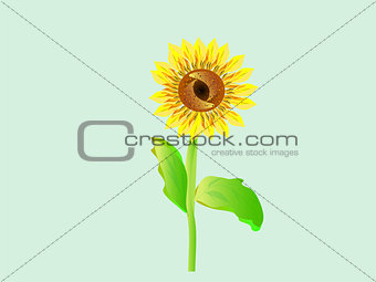 beautiful flower sunflower bright colored summer