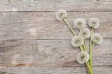Dandelion flowers on wooden background