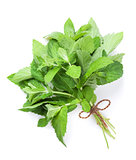 Fresh garden herbs. Mint