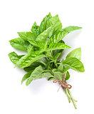 Fresh garden herbs. Green basil