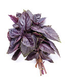 Fresh garden herbs. Purple basil