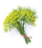 Fresh garden herbs. Dill