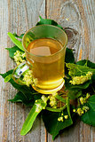 Tea of Linden-Tree Flowers