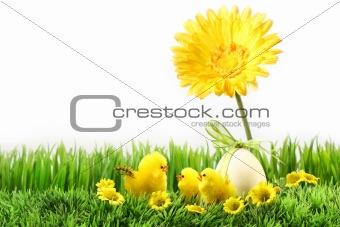 Little chicks on the grass