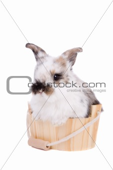 Bunny in the bathtub