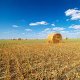 Hay bales in field.