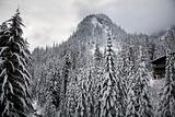 Snow Trees Mountain Ski Lodge Alpental Washington
