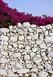 Stone wall and bougainvillea