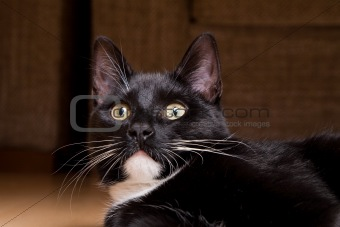 Adorable black cat