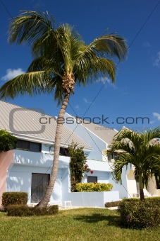 cottage and palm