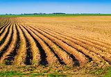 spring plowed field