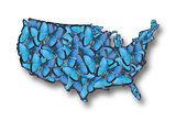 USA map of butterflies.
