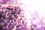 pink flowers spring romantic background