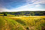 Idyllic agricultural landscape summer view