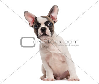 French Bulldog (3 months old) sitting in front of a white backgr