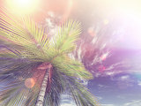 3D render of looking up a palm tree towards the sky