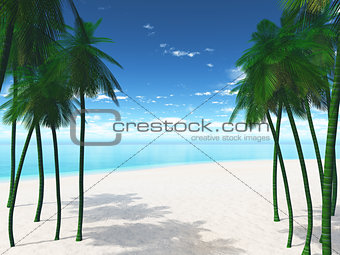 3D palm trees on a beach
