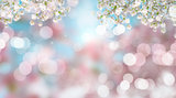 Cherry blossom on defocussed background