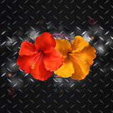 Hibiscus on metallic diamond plate